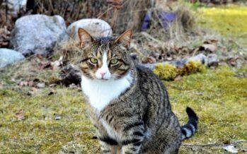 Helena-Reet: Aprillist ja esimestest kevadtoimetustest aias + SUUR GALERII!