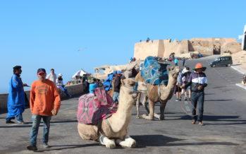 Tükikesi Marokost… Veidi kaamelist