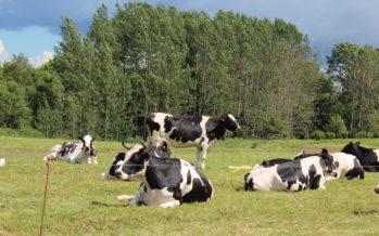 Eesti maaelu arengukava: 4 PRIA toetust, millega võid maal läbi lüüa