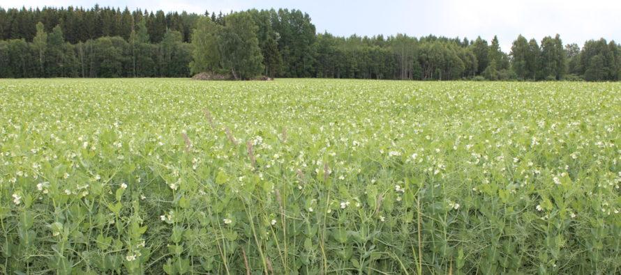 Maaelukomisjon arutas erakorralist toetust põllumeestele