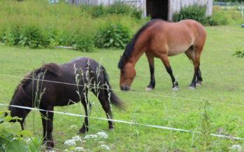 22.juulil toimuv avatud talude päev meelitab üle Eestis rahva taas maale