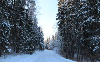 Eesti: Metsaregistri uuendused annavad metsaomanikule kindluse, et tema omandiga ei toimetata tagaselja