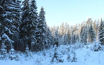 GALERII: Looduspildikesi talvisest Eestist (Kanepi, Põlva maakond)