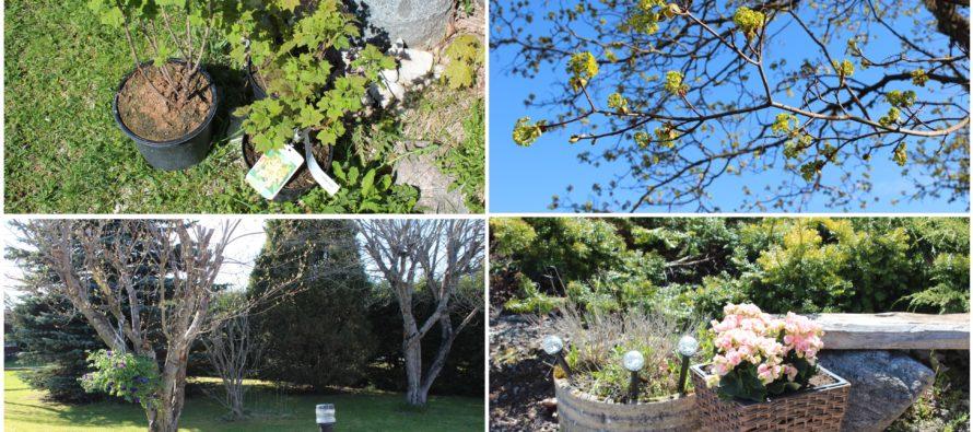 Helena-Reet: Toimetused aias ning esimesed ostud aianduskeskustest