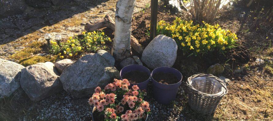 Helena-Reet: Emadepäev + Maikuu toimetused aias