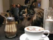 Sina, kes armastad nurruvaid kasse, mine külasta neid paiku maailmas! FOTOD+VIDEO!
