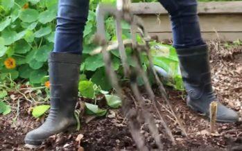 Pista käed mulda – Looduse mikrofloora kaitseb inimest allergiate ja muude autoimmuunhaiguste eest