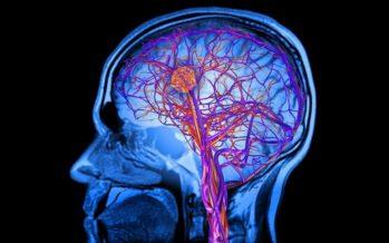 Ootamatu avastus: teadlased leidsid inimeste ja hiirte ajust soolebaktereid