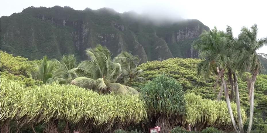 hawaii-ohmygossip-7-vihmamets-mets