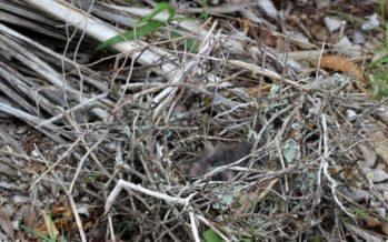 Loodustoimetaja Risto Salovaara: Soomes surevad linnupojad massiliselt nälga