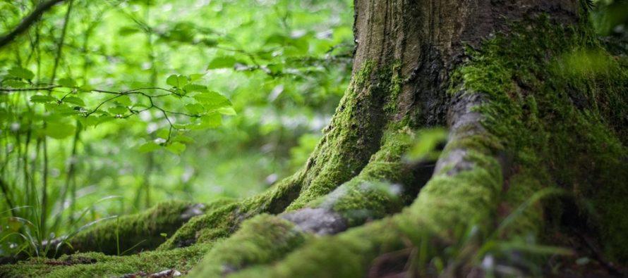 Keskkonnaagentuur: Eesti õhk on järjest puhtam