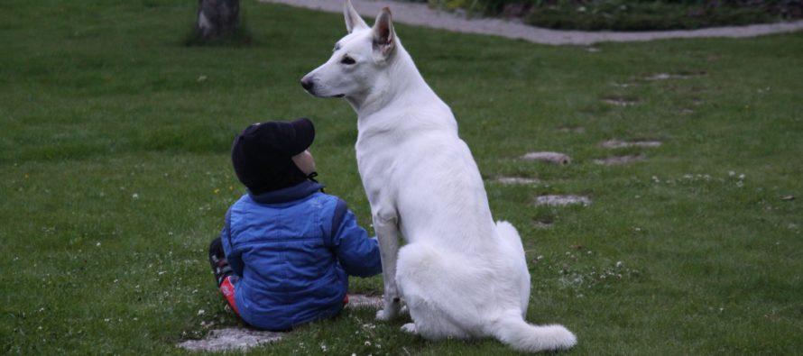 Uuring paljastab: Koera ja tema peremehe südamed löövad koos viibides samas rütmis