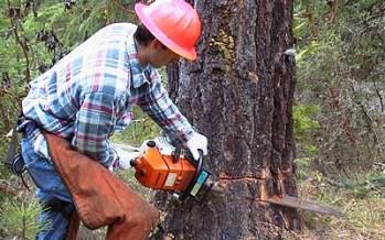 VIDEO: Mees raius puu maha – see, mis ta puu seest leidis ehmatas ta poolsurnuks