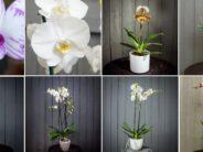 Kuidas ja millal orhideed ümber istutada + FOTOD!