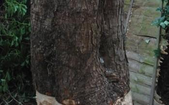 Pere saagis oma aias puu maha – see, mis juhtus järgmisena, toob pisarad silma + FOTOD!