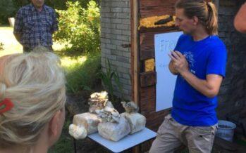 Läänemaal Männa talus tegutsev Eesti Seenefarm tutvustas Avatud Talude Päeval kodumaise Austerservik seente kasvatust + GALERII!