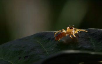 7 LOODUSLIKKU VIISI, kuidas suvilasse tungivatest sipelgatest vabaneda