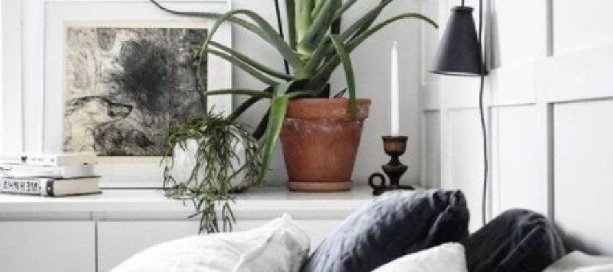 NEED TAIMED PUHASTAVAD ÕHKU, TOOVAD RAHU JA HEA UNE – 10 TOATAIME, mida võiksite magamistoas kasvatada