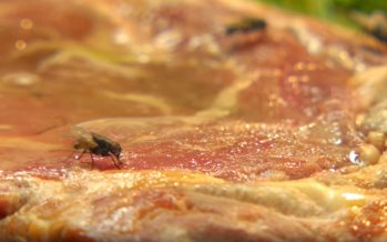 Kas tead, millega kärbes tegeleb, kui toidule maandub? Päris hirmus, aga mitte eluohtlik!