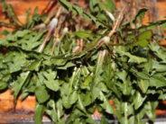 Retsept: Võilille lehe-juure salat